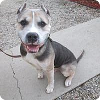 Adopt A Pet :: Saint Nicholas - Encino, CA