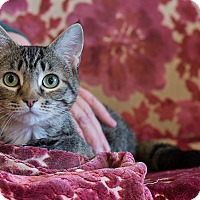 Adopt A Pet :: Tomie - Boise, ID