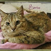 Adopt A Pet :: Serina - Shippenville, PA