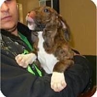 Adopt A Pet :: Gretta - Antioch, IL