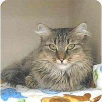 Adopt A Pet :: Leah - Mesa, AZ