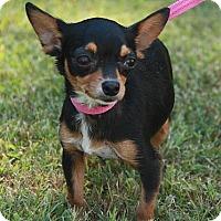 Adopt A Pet :: Chaquita - Staunton, VA