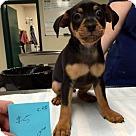 Adopt A Pet :: Munster (Has Application)