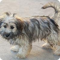 Adopt A Pet :: Marfa - adoption pending - Norwalk, CT