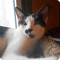 Adopt A Pet :: Bruce - Richland, MI