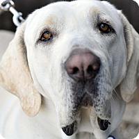 Adopt A Pet :: Bessie - Newhall, CA