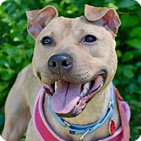 Adopt A Pet :: MARIE - Pittsburgh, PA