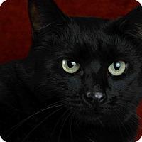 Adopt A Pet :: Panther / ADOPTION PENDING - Woodinville, WA