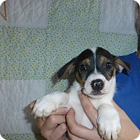 Adopt A Pet :: Keiser - Oviedo, FL