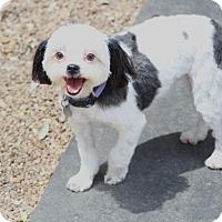 Adopt A Pet :: Paisley - Woonsocket, RI