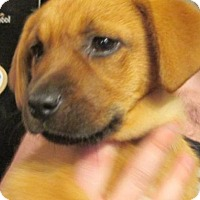 Adopt A Pet :: Louann - Rocky Mount, NC