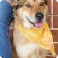Adopt A Pet :: Lexington - Rockville, MD