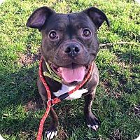 Adopt A Pet :: Austin - Lapeer, MI