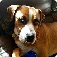 Adopt A Pet :: Zeus - Davenport, IA