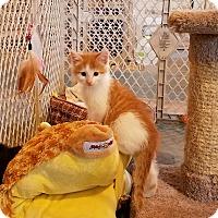 Adopt A Pet :: Meeko - Geneseo, IL