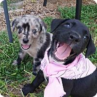 Adopt A Pet :: Tink - Weeki Wachee, FL