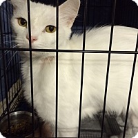 Adopt A Pet :: Orion - Byron Center, MI