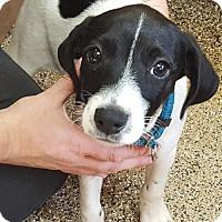 Adopt A Pet :: Jasper - Monticello, IA