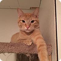 Adopt A Pet :: Pikachu - Hanna City, IL