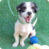Adopt A Pet :: Jeremy - San Diego, CA