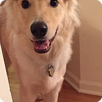 Adopt A Pet :: Appleby - MEET HIM - Woonsocket, RI