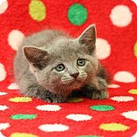 Adopt A Pet :: Gobble - Yucaipa, CA