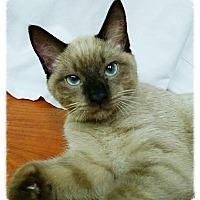 Adopt A Pet :: Espresso - Los Alamitos, CA