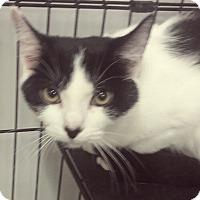 Adopt A Pet :: Dixie - Paducah, KY