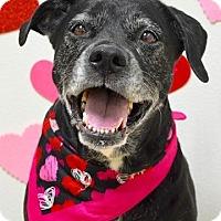 Adopt A Pet :: Domino - Dublin, CA