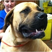 Adopt A Pet :: Golilath - Asheboro, NC