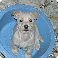 Adopt A Pet :: Muffin - San Ysidro, CA