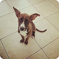 Adopt A Pet :: Kiwi - Scottsdale, AZ