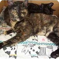 Adopt A Pet :: Sarah - El Cajon, CA