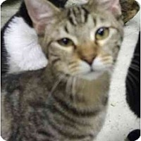 Adopt A Pet :: Kiko - Fort Lauderdale, FL