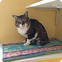 Adopt A Pet :: Wesley - Lancaster, MA
