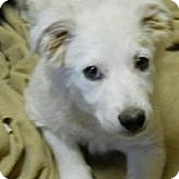 Adopt A Pet :: Barkley - dewey, AZ