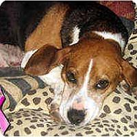Adopt A Pet :: Erma - Novi, MI