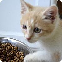 Adopt A Pet :: Jada - Xenia, OH