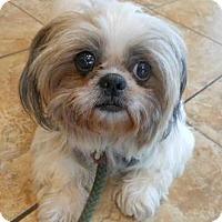 Adopt A Pet :: Pearl - Rockaway, NJ