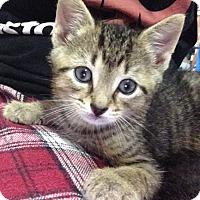 Adopt A Pet :: Ian - Long Beach, NY