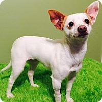 Adopt A Pet :: Allie - Russellville, KY