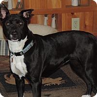 Adopt A Pet :: Briley - North Haverhill, NH