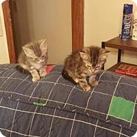 Adopt A Pet :: zz 'Greybit & Steambit' courtesy Post - Cincinnati, OH