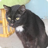 Adopt A Pet :: Miller - Pittsburg, KS