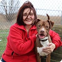 Adopt A Pet :: Magoo - Elyria, OH