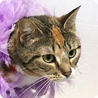 Adopt A Pet :: Olga - Murfreesboro, NC