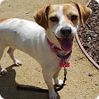 Adopt A Pet :: Hollie - Los Angeles, CA