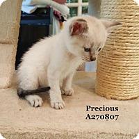 Adopt A Pet :: PRECIOUS - Conroe, TX
