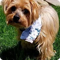 Adopt A Pet :: Zummie aka Willie - Aurora, CO