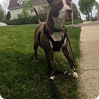 Adopt A Pet :: Snoopy **Courtesy Cupid** - West Allis, WI